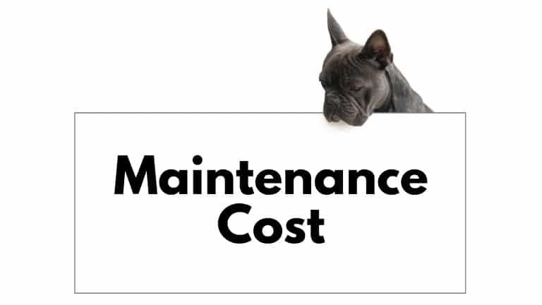 french bulldog maintenance cost